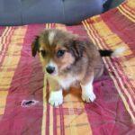 Gadehunden Benny sidder i sofaen