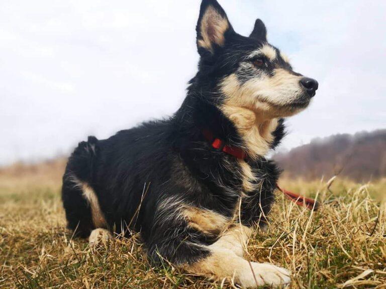 Hund der ligger på græs