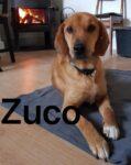 Zuco - 15