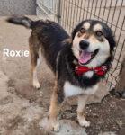 Roxie og Remi - 2