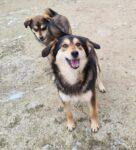 Roxie og Remi - 45